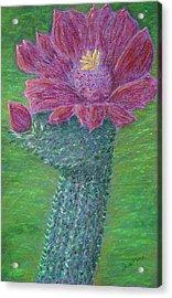 Cactus Bloom Acrylic Print by Dawn Marie Black