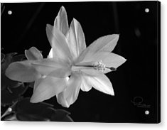 Acrylic Print featuring the photograph Cactus Blossom by Ludwig Keck
