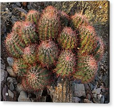 Cactus Burst Acrylic Print
