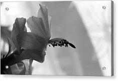 Acrylic Print featuring the photograph Cactus Dance by Silke Brubaker