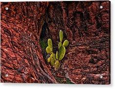 Cactus Dwelling Acrylic Print