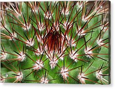 Cactus Facheiroa Ulei Abstract Acrylic Print by Nigel Downer