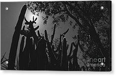 Acrylic Print featuring the photograph Cactus Family by Kenny Glotfelty