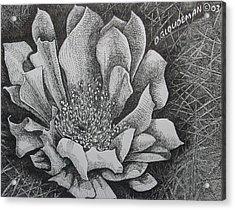 Cactus Flower Acrylic Print by Denis Gloudeman