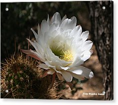 Cactus Flower Full Bloom Acrylic Print