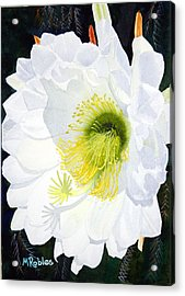 Cactus Flower II Acrylic Print by Mike Robles