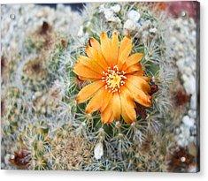 Cactus Flower Acrylic Print by Marina Oliveira