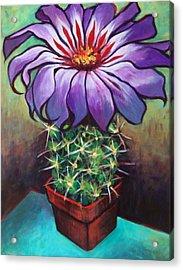 Cactus Flower Acrylic Print