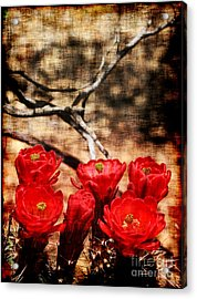 Acrylic Print featuring the photograph Cactus Flowers 2 by Julie Lueders