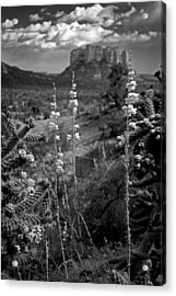 Cactus Flowers And Courthouse Bluff Bw Acrylic Print by Dave Garner