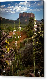 Cactus Flowers And Courthouse Bluff Acrylic Print by Dave Garner