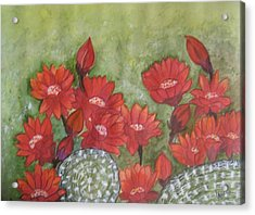 Cactus Flowers Acrylic Print by Usha Rai