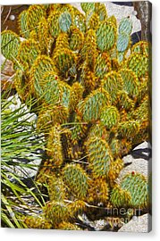 Cactus Acrylic Print by Gregory Dyer