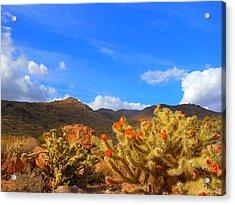 Cactus In Spring Acrylic Print