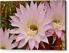 Acrylic Print featuring the photograph Cactus In The Backyard by Debby Pueschel