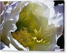 Cactus Interior Acrylic Print