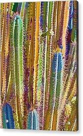 Cactus Acrylic Print by Marcia Colelli