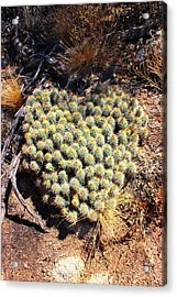 Acrylic Print featuring the photograph Cacti Need Love Too by Natalie Ortiz