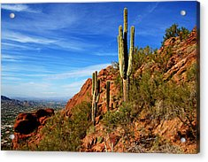 Cactus On Camelback Acrylic Print by Daniel Woodrum