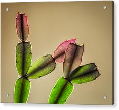 Cactus Rainbow Acrylic Print