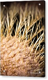 Acrylic Print featuring the photograph Cactus Skin by John Wadleigh