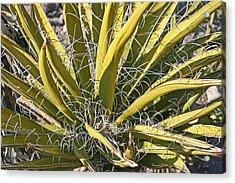 Cactus15 Acrylic Print