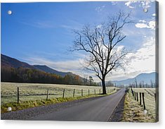 Tree On A Frosty Morn Acrylic Print by Marilyn Carlyle Greiner