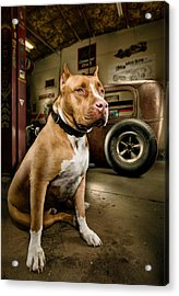 Caesar At Millers Chop Shop Acrylic Print by Yo Pedro