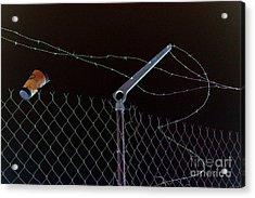 Caffeinated Jail Break Acrylic Print by Joe Jake Pratt