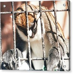 Caged But Strong Acrylic Print by Belinda Lee