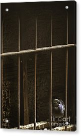Caged Acrylic Print by Margie Hurwich