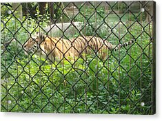 Acrylic Print featuring the photograph Caged by Fortunate Findings Shirley Dickerson