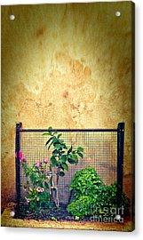 Caged Acrylic Print by Silvia Ganora