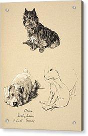 Cairn, Sealyham And Bull Terrier, 1930 Acrylic Print