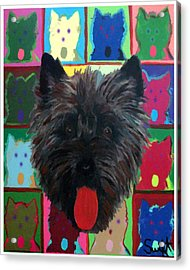 Cairn Terrier Acrylic Print by Char Swift