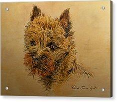 Cairn Terrier Dog Acrylic Print