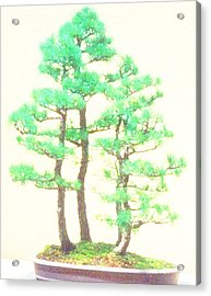 Acrylic Print featuring the painting Caitlin Elm Bonsai Tree by Marian Cates
