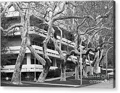 Cal Poly Pomona Landscape Acrylic Print by University Icons