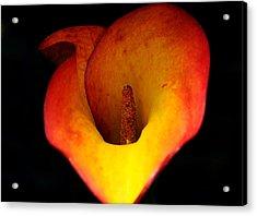 Cala Lily Acrylic Print