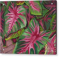 Caladiums Acrylic Print
