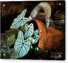 Caladiums In Broken Pot Acrylic Print by Linda Cox