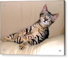Calendar Kitten Rescue #1 Acrylic Print by Nancy Belle