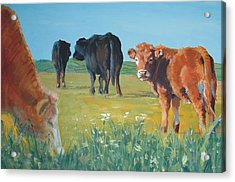 Calf Painting Acrylic Print