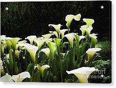 Cali Lily Acrylic Print