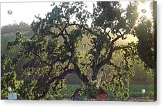 Acrylic Print featuring the photograph Cali Setting by Shawn Marlow
