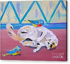 Calico And Friends Acrylic Print by Phyllis Kaltenbach