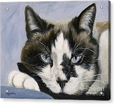 Calico Cat With Attitude Acrylic Print
