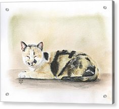 Calico Acrylic Print by Heather Gessell