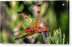 Calico Pennant Acrylic Print by Rob Sellers
