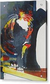 Calico Suncatcher Acrylic Print by Chere Force